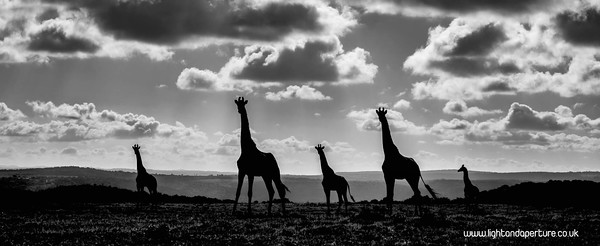 DSF2912-copy 