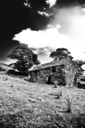 DSC 1133 copy 