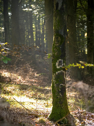 PA123670 