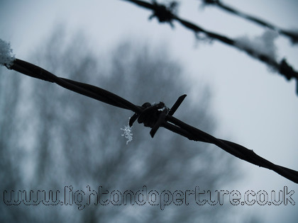 barbed wire copy 