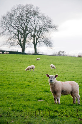 DSC 3087 